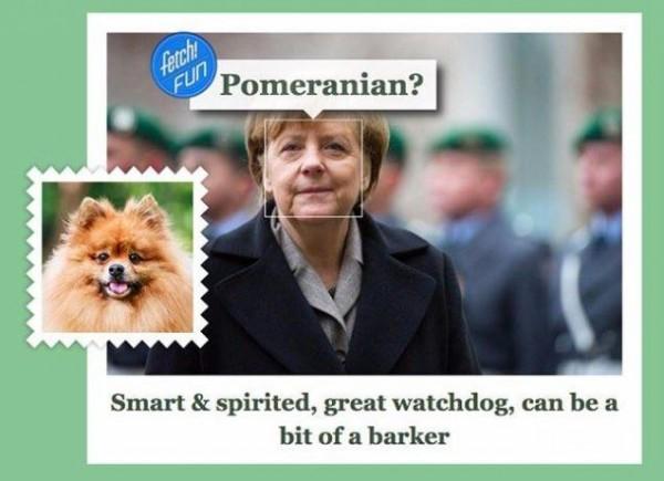 сервис what dog ангела меркель