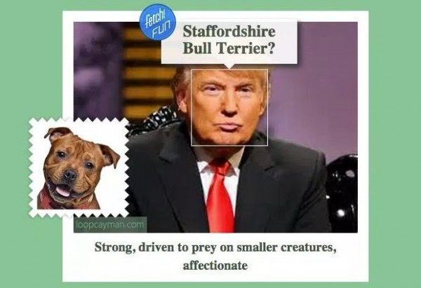 сервис what dog дональд трамп